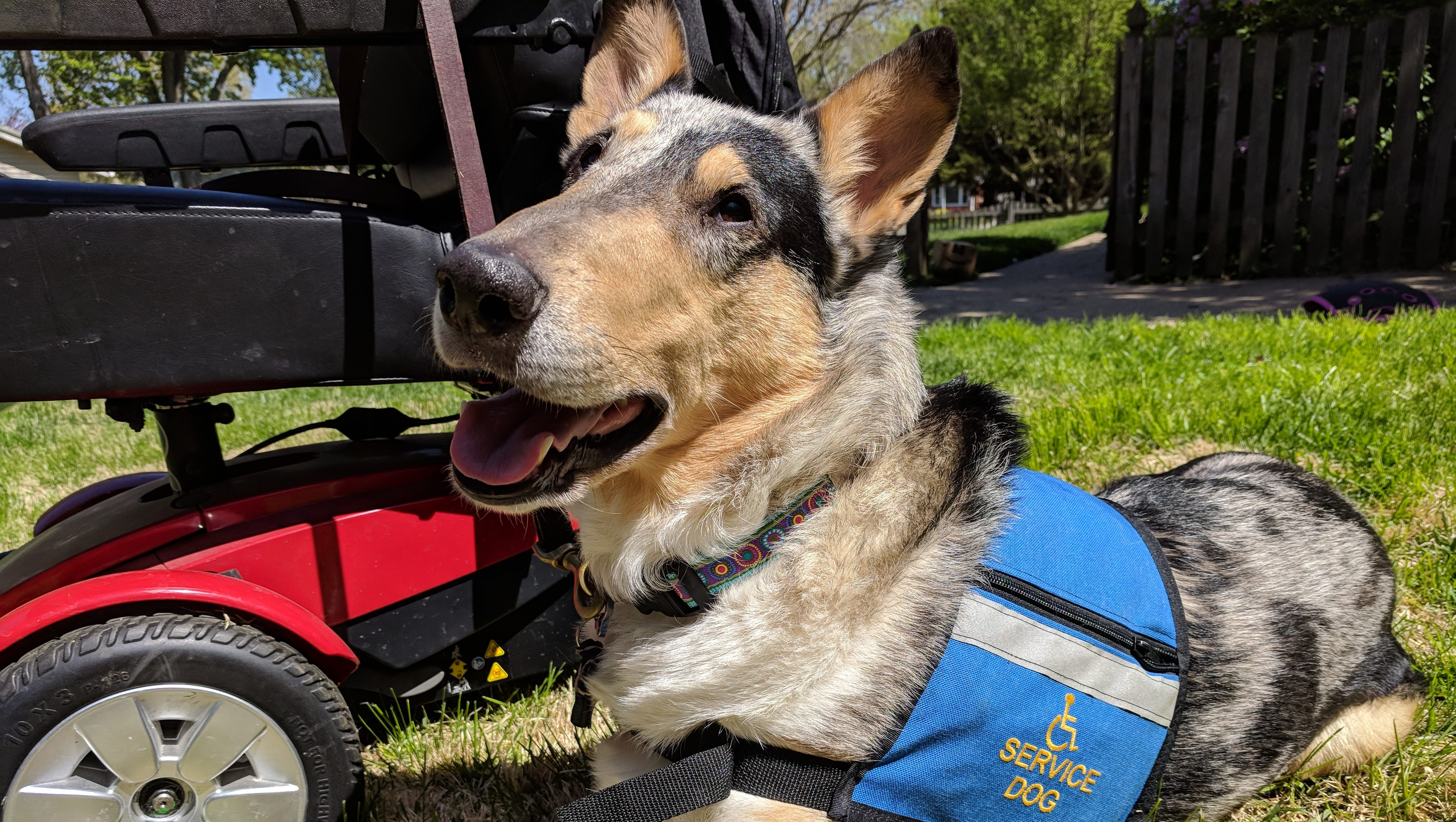Cooperative Paws Service Dog Education For Professional Dog Trainers